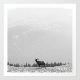 Ram, Black and White Art Print