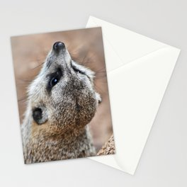 Meerkat looking for eagles Stationery Cards