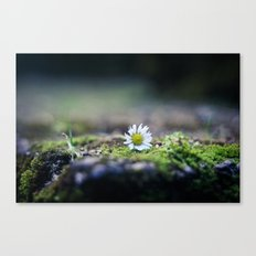 Just a Daisy Canvas Print
