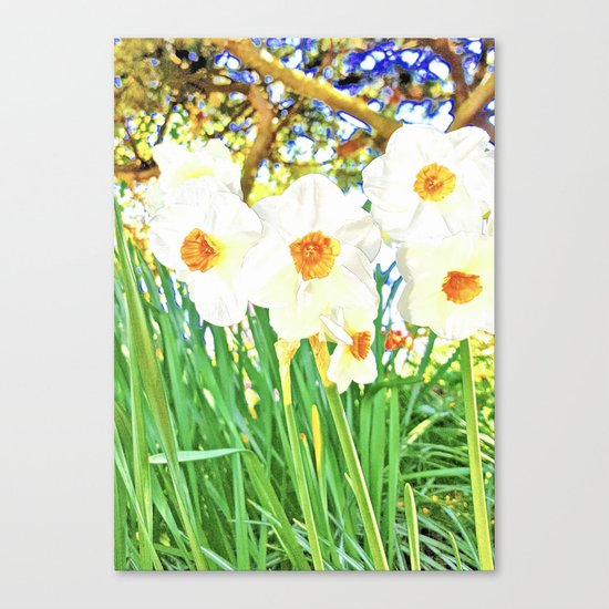 Bright Spring Narcissus Canvas Print