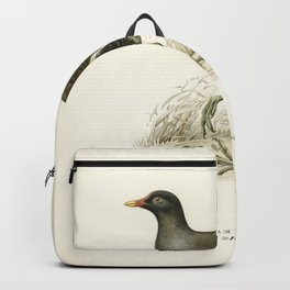Common moorhen (gallinula chloropus) illustrated by the von Wright brothers Backpack