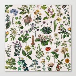 vintage botanical print Canvas Print