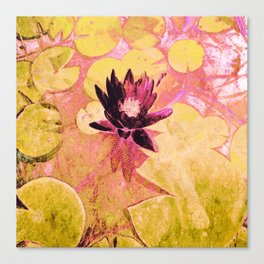 Colours WaterLily Canvas Print
