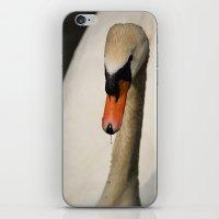 swan iPhone & iPod Skins featuring Swan by Lorenzo Bini