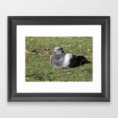 Lone Roosting Framed Art Print