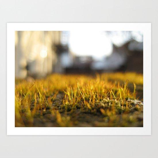 Brooklyn Moss Art Print