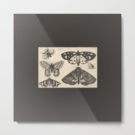 Bee Moths Butterfly - Vintage 17th-Century Illustration in Black and Cream Metal Print