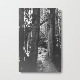Forest Wonderland - Black and White Nature Photography Metal Print