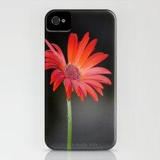 Red Gerbera Daisy on Black iPhone (4, 4s) Slim Case