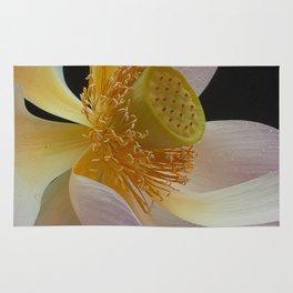 Lotus on Black.6207 Rug