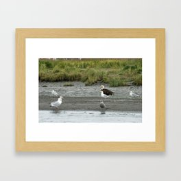 Eagle and Pals waiting for food Framed Art Print