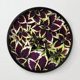 Coleus Plant Leavs Wall Clock