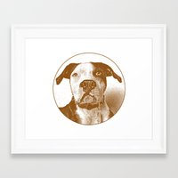 pit bull Framed Art Prints featuring Pit Bull by George Peters