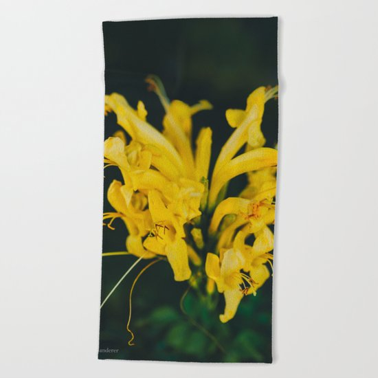 Beautiful yellow flower on black background Beach Towel