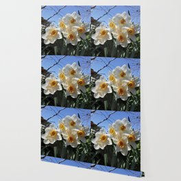 Sunny Faces of Spring - Gold and White Narcissus Flowers Wallpaper