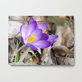 sign of spring II Metal Print
