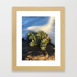 Mountain side succulents Framed Art Print