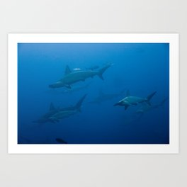 School of Hammerhead Sharks Art Print