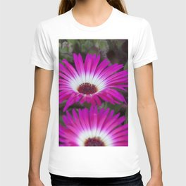 Livingstone daisies pink and white T-shirt