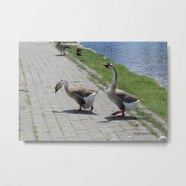 Bigs birds 2 Metal Print