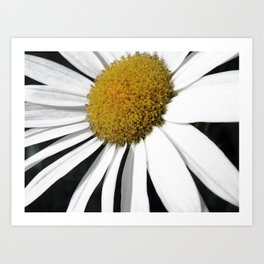 White and Curly Art Print