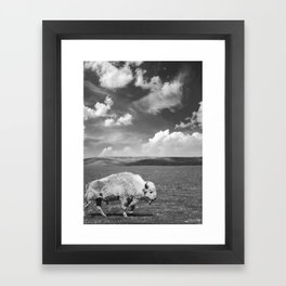 Great White Buffalo Framed Art Print