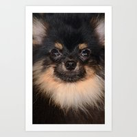 pomeranian Art Prints featuring Pomeranian by Pancho the Macho