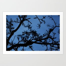 Midnight Branches Art Print