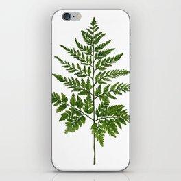 Fern 2 Painting iPhone Skin