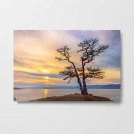 Baikal pine Metal Print