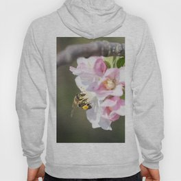 Bee collects pollen sitting on the apple tree flower Hoody
