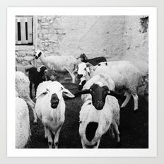 Sheep in Morrocan desert (black & white) Art Print