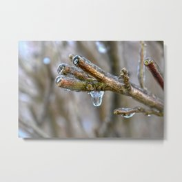 Frozen Tree Branch Metal Print