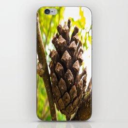Pine Cone  iPhone Skin
