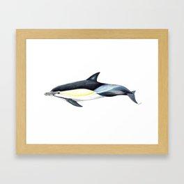 Common dolphin (Delphinus delphis) Framed Art Print