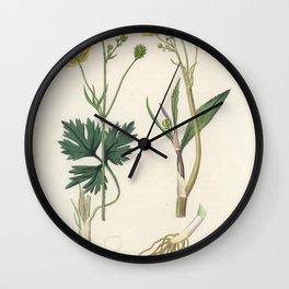 Lesser spearwort (Ranunculus flammula)  from Medical Botany (1836) by John Stephenson and James Mors Wall Clock
