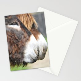 burros Stationery Cards