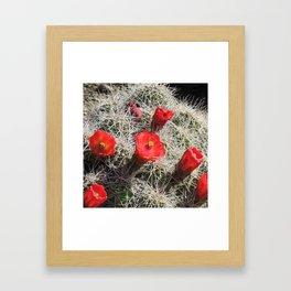 A Hedgehog Cactus Looks Sunward Framed Art Print