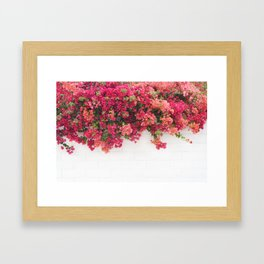 bougainvillea wall Framed Art Print