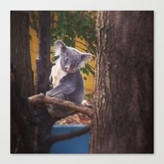 Kozy Koala 2 Canvas Print