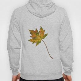 Maple leaf in autumn Hoody