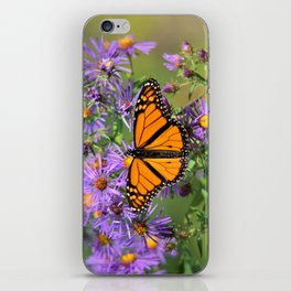 Monarch Butterfly on Wild Aster Flowers iPhone Skin