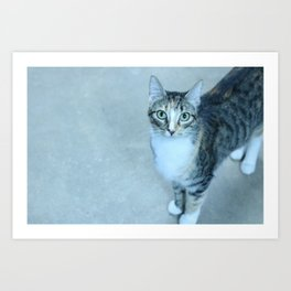 Revina the Cat with the Precious Face Art Print