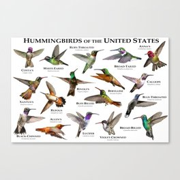 Hummingbirds of the United States Canvas Print