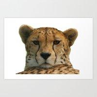 cheetah Art Prints featuring Cheetah by Sean Foreman
