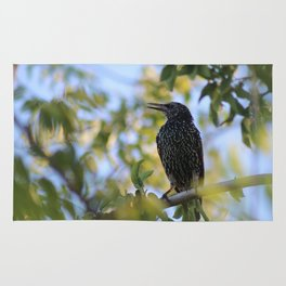 Common Starling Rug