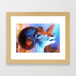 Cabra mexicana Framed Art Print