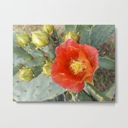 Orange Cactus Flower Metal Print