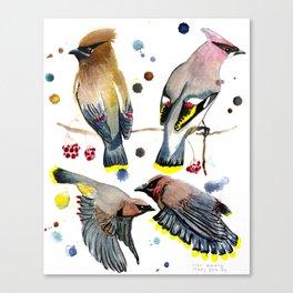 Cedar Waxwing Study Canvas Print