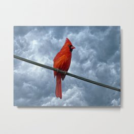A Bird On A Wire. Metal Print